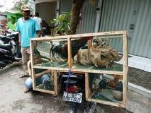 poultry fotos de archivo