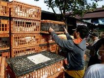 poultry foto de archivo