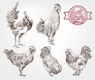 Poultry breeding Royalty Free Stock Images