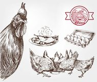 Poultry breeding Stock Photo