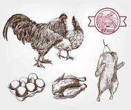 Poultry breeding Stock Images