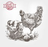Poultry breeding sketches Royalty Free Stock Image