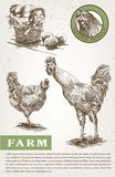 Poultry breeding sketches. Poultry breeding. set of sketches made by hand Stock Photo