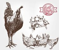 Poultry breeding Royalty Free Stock Photos