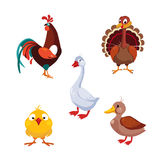 Poultry Domestic Birds, Vector Illustration Set Stock Images