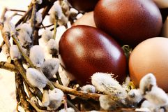 Poultry eggs in a bird's-nest Stock Photos
