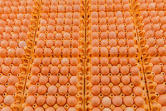 Poultry - Eggs Royalty Free Stock Images
