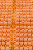 Poultry - Eggs Royalty Free Stock Photo
