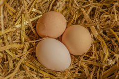 Poultry - Eggs Stock Images