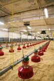Poultry farm. The modern and new automated integrated poultry farm Royalty Free Stock Images