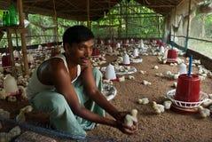 POULTRY FARM Stock Image