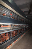 Poultry Farm Stock Photo