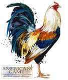 Poultry farming. Chicken breeds series. domestic farm bird illustration. Poultry farming. Chicken breeds series. domestic farm bird watercolor illustration royalty free illustration