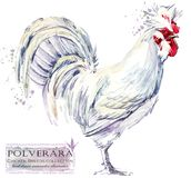 Poultry farming. Chicken breeds series. domestic farm bird illustration. Poultry farming. Chicken breeds series. domestic farm bird watercolor illustration vector illustration