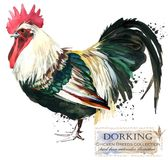 Poultry farming. Chicken breeds series. domestic farm bird. Watercolor illustration Stock Images