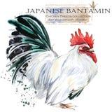 Poultry farming. Chicken breeds series. domestic farm bird. Watercolor illustration. farm animals vector illustration