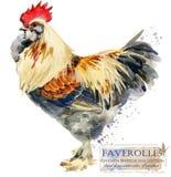 Poultry farming. Chicken breeds series. domestic farm bird. Watercolor illustration stock illustration