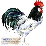 Poultry farming. Chicken breeds series. domestic farm bird. Watercolor illustration Stock Image
