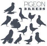 Poultry farming. Pigeon breeds icon set. Flat design Royalty Free Stock Photos