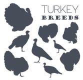 Poultry farming. Turkey breeds icon set. Flat design Stock Photos