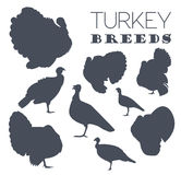 Poultry farming. Turkey breeds icon set. Flat design. Vector illustration Stock Photos