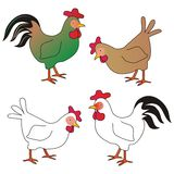 Poultry Royalty Free Stock Images