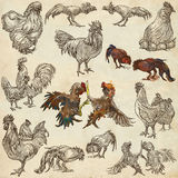 Poultry - An hand drawn full sized pack. Freehand sketching on o royalty free illustration