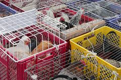 Poultry market Royalty Free Stock Photo