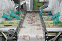 Poultry processing royalty free stock photography