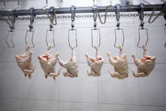 Poultry processing Stock Images
