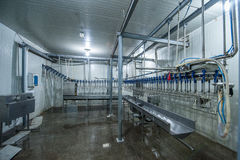 Poultry processing plant. A large industrial plant for processing poultry Royalty Free Stock Photos