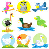 Poultry set. Bird and poultry cartoon set Stock Photo