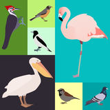 Poultry a set of different kinds of birds royalty free illustration