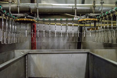 Poultry slaughterhouse. Poultry processing plant line. Suspended conveyor mechanism turning line. Chicken factory Royalty Free Stock Photo