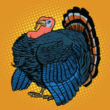 Poultry Turkey, realistic vector illustration. Poultry Turkey, realistic pop art retro vector illustration. Farm animal. Thanksgiving day Royalty Free Stock Image