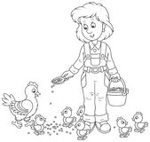 Poultry woman feeding chickens Royalty Free Stock Photos