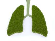 Poumon vert Photographie stock libre de droits