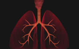 Poumons Images libres de droits