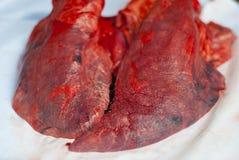 Poumons de porc Image stock