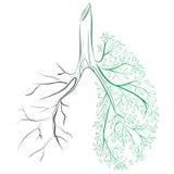 Poumons humains Appareil respiratoire Poumons sains Lumière sous forme d'arbre Schéma Dessin à la main médecine Illustration de Vecteur