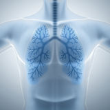 Poumons propres et sains Photos stock