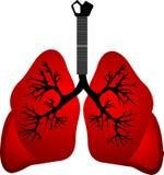 Poumons rouges Images libres de droits