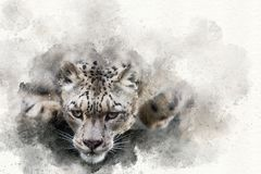Pouncing snow leopard mixed media. Mixed media digital painting of a snow leopard in motion Royalty Free Stock Photography