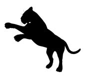 Pouncing tiger silhouette 300 dpi Stock Photography