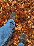 Pounding the dry leaves. Walk on a carpet of dry leaves in the forest Stock Image