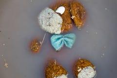 Poupée abandonnée de chien dans l'eau sale Photo stock