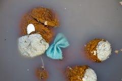 Poupée abandonnée de chien dans l'eau sale Image libre de droits