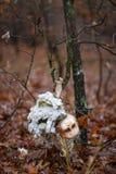 Poupée cassée dans la forêt Photo libre de droits