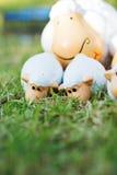 Poupée de moutons de famille sur le pré Photos libres de droits