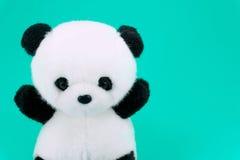 Poupée de panda noire et blanche, jante noire des yeux, jouet de panda pour des enfants sur le vert Photographie stock libre de droits